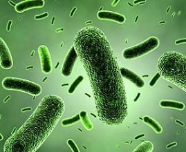 photo-of-bacillus-coagulans.jpg