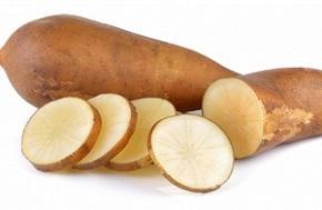 photo-of-fresh-yacon-root.jpg