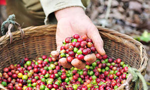 coffee-farm.jpg