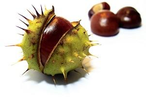 photo-of-horse-chestnut-seed.jpg