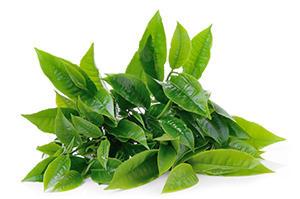 greentealeaves.jpg