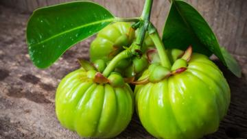 What's The Hype With Garcinia Cambogia?