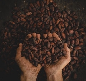 Hands Full of Cocoa